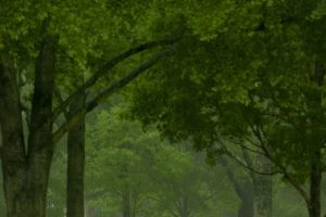 Levingston, Holder of the Lester Glenn Fant Chair